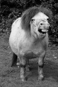 A not so pretty horse.....