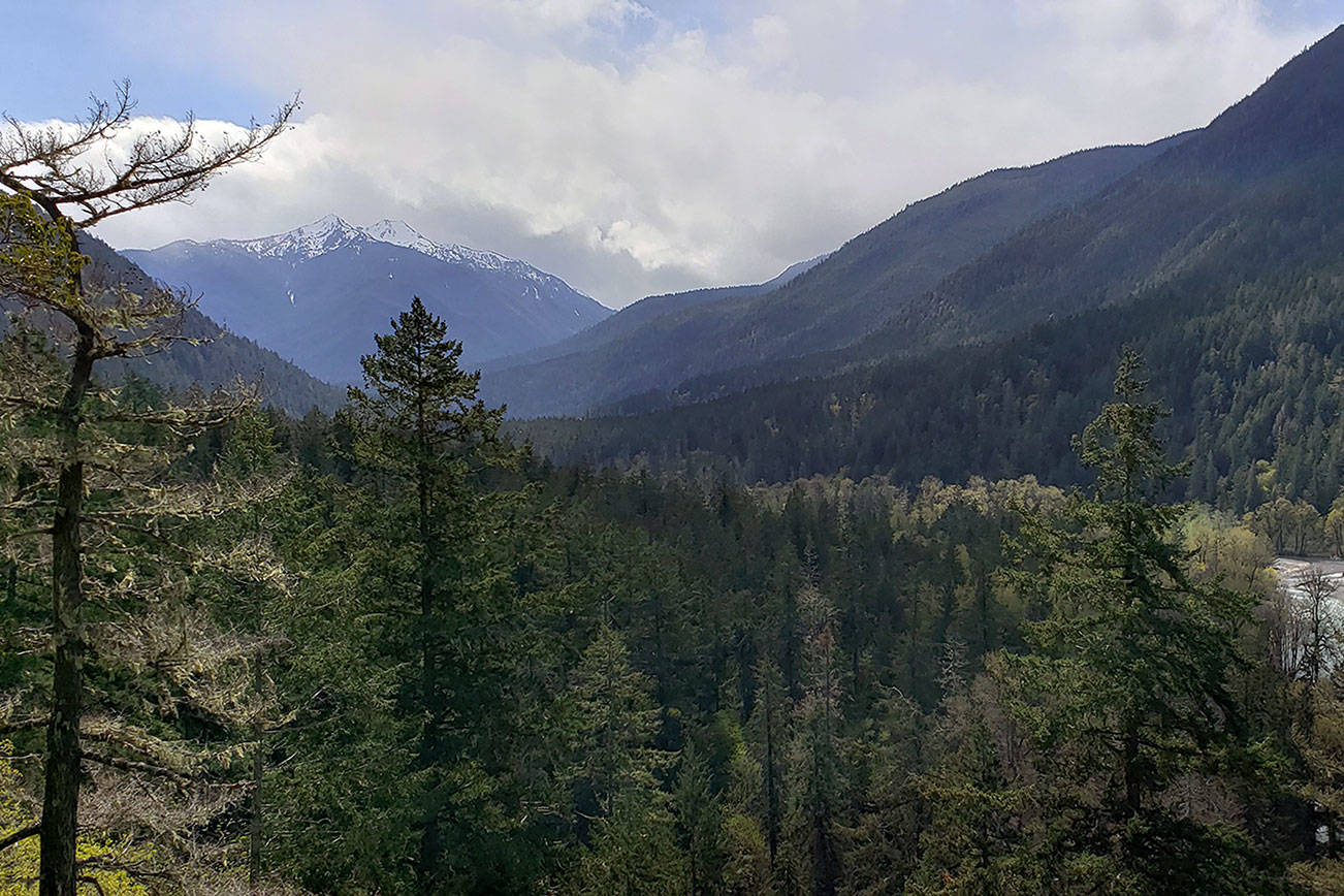 Olympic National Park to begin phased-in reopening next week