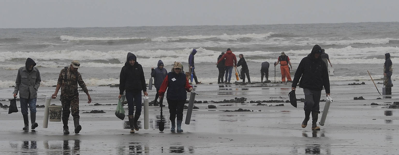 Clam diggers leave Roosevelt Beach with limits of Razor Clams in the spring of 2019. Photo by Lonnie Archibald