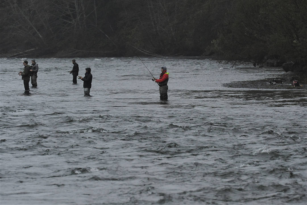 Bank fishermen gather at the confluence of the Sol Duc and Bogachiel Rivers, which form the Quillayute, in search of salmon. Recent rains have raised local rivers bringing in both Coho and Chinook salmon. Photo by Lonnie Archibald